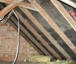 Condensation in loft space